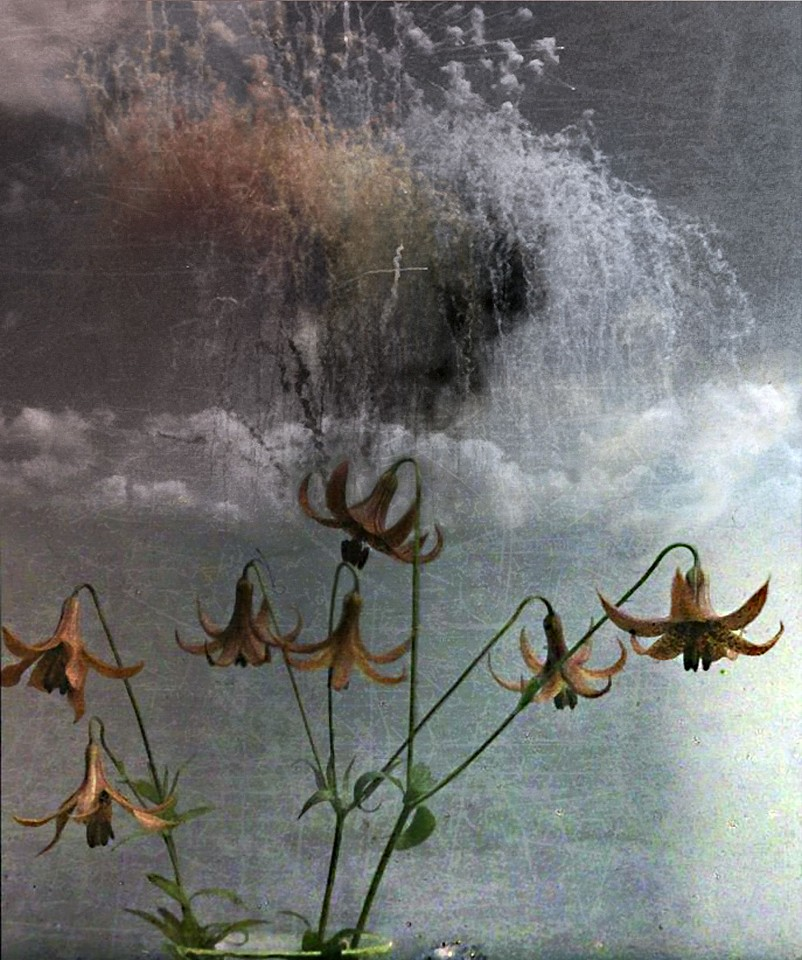 Oliver Wasow, Flowers and Fireworks 2012, Archival inkjet